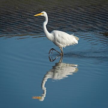 White  Heron and reflection by baji