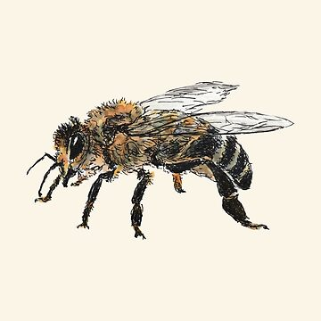 Honey Bee by dmtab