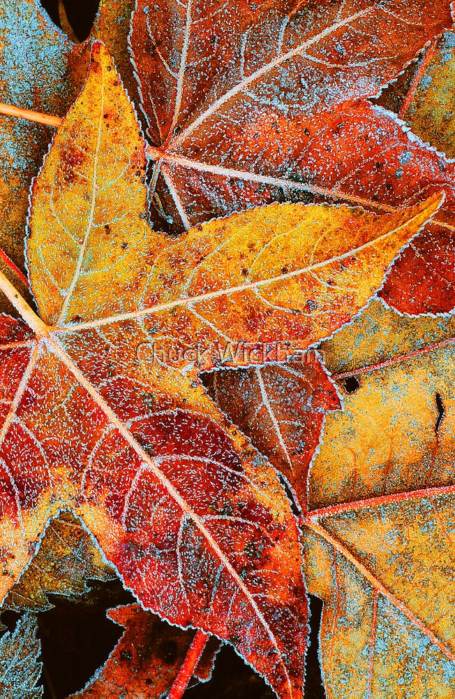 FROSTED LEAVES by Chuck Wickham