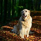 Golden retriever on golden leaves by Andrew Jones