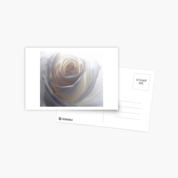 Soft White Postcard