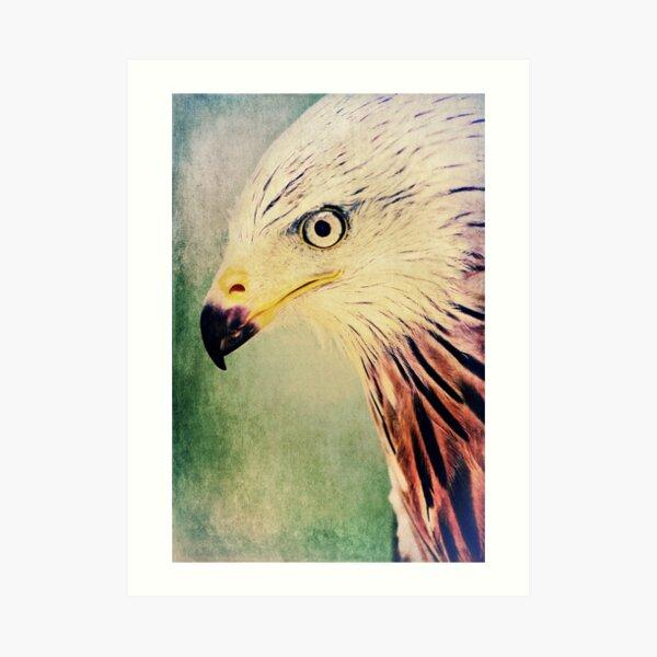 Red Kite Art Art Print