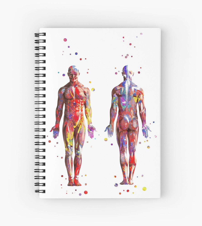 Muscular System Watercolor Anatomy Art Human Muscles Medical Art