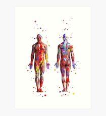 Muscular System, watercolor anatomy art, human muscles, medical art, man body Art Print