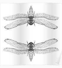 Dragonfly Art Print Poster