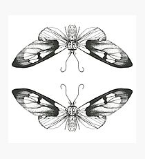 Moth Art Print Photographic Print