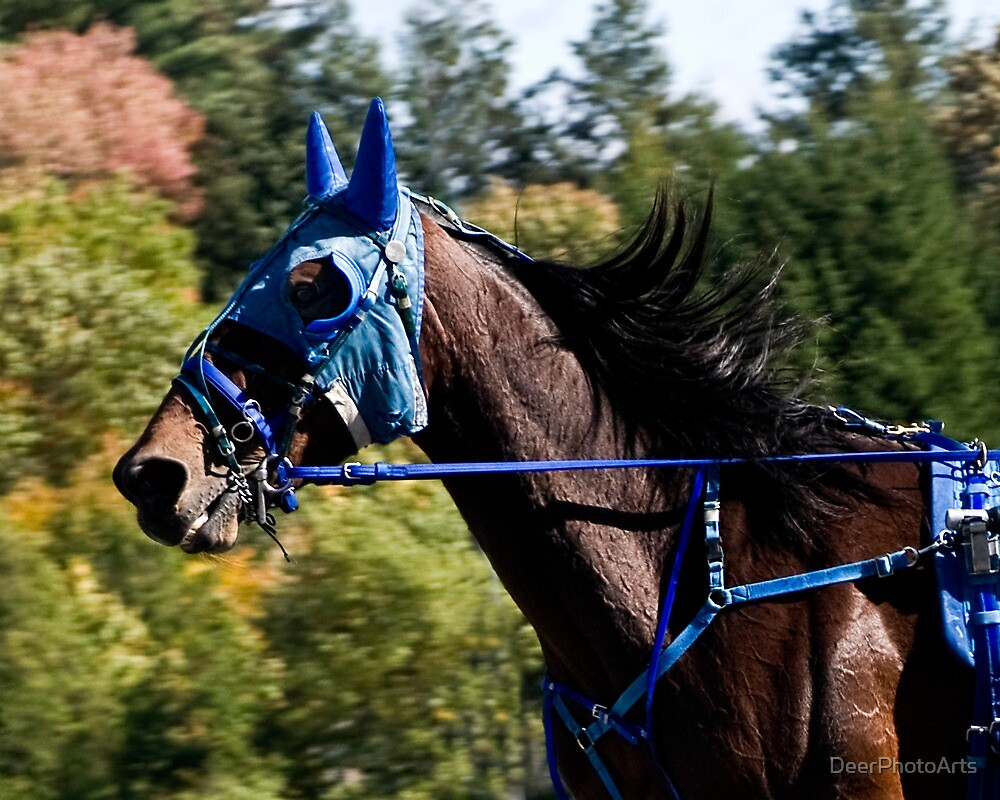 The Masked Wonder Horse by DeerPhotoArts
