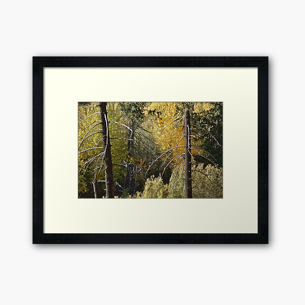 For Everything There is a Season Framed Art Print