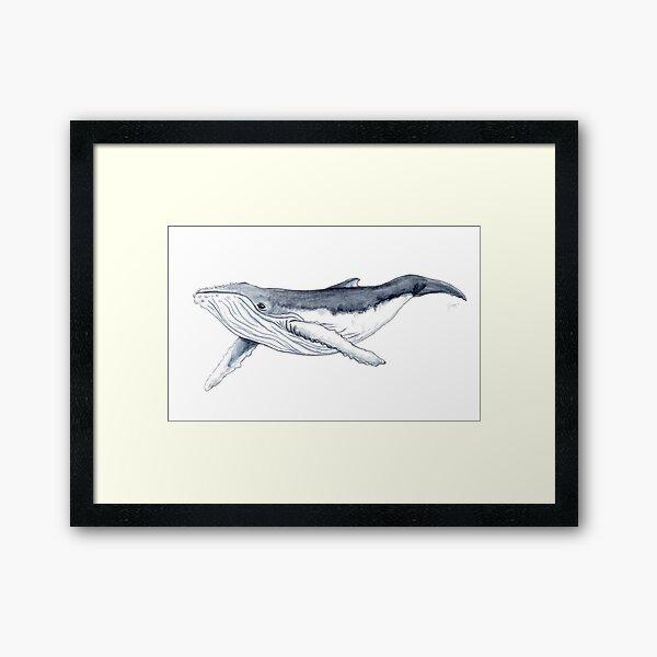 Humpback whale baby Framed Art Print
