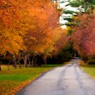 Beautiful Colors of Autumn by Monica M. Scanlan