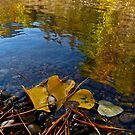 AUTUMN LEAVES ON THE RIVERBANK by Elaine Bawden