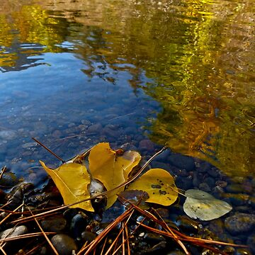AUTUMN LEAVES ON THE RIVERBANK by elainebawden