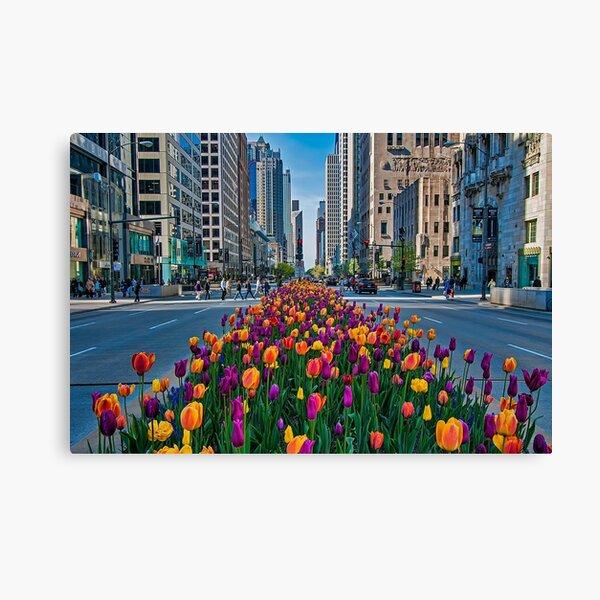 Chicago Tulips Canvas Print