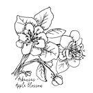 Apple Blossom Arkansas State Flower Illustration by JourneyHomeMade