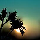 The Sad Garden series II by phantomorchid