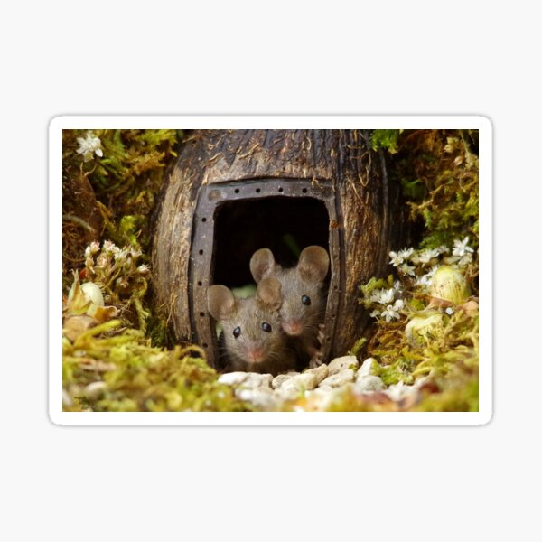 two wild mouse at the  wood pile door  Sticker