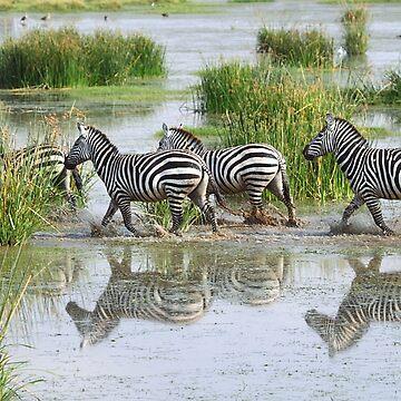 Zebra Crossing by Carole-Anne