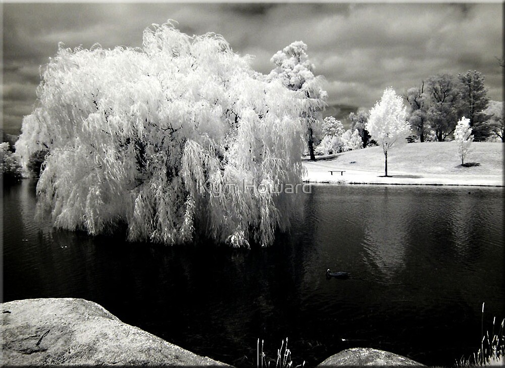 Weeping Willow by Kym Howard