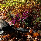 mourning in fall by mediamode