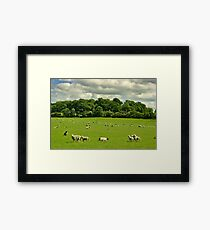 Sheep in English Countryside Framed Print