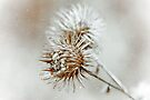 Winter Wisp by Elaine Manley