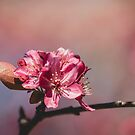 Dreaming of Spring by Briana McNair