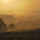 Orange Mist by relayer51