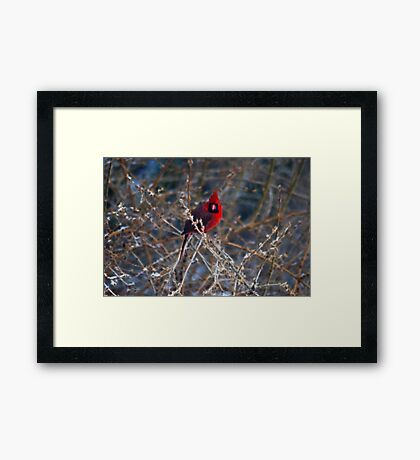 Christmas Bird Framed Print