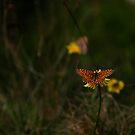 Schmetterling  von laura-S