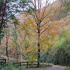 Woodland Autumn by lezvee