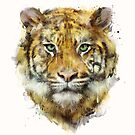 Tiger // Stärke von Amy Hamilton