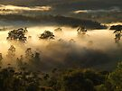 """""""Mist on the Hills"""" by debsphotos"""