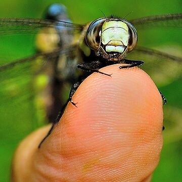 Dragonfly & Thumb by NaturesEarth