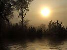 """"""" Forest Awakening"""" by debsphotos"""