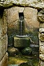 St Moling's Well, St Mullins, County Carlow, Ireland by Andrew Jones
