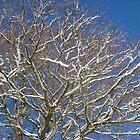Snowy Branches by Jennifer J Watson