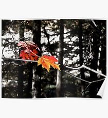 Lincoln Woods Leaves Poster