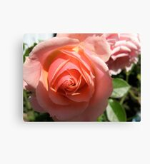 Quixotic Rose Leinwanddruck