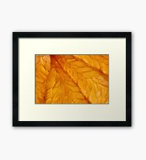 Grapefruit III Framed Print