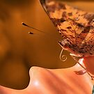 Orange Butterfly by TJ Baccari Photography