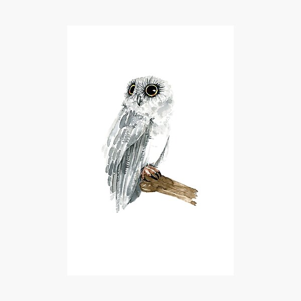 Watercolor Grey Owl Photographic Print