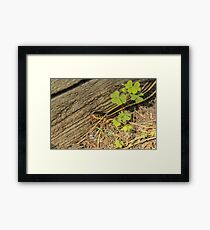Garter Snake and Tongue Framed Print