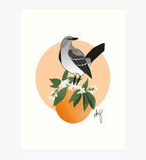 Florida Mockingbird and Orange Blossom  Art Print