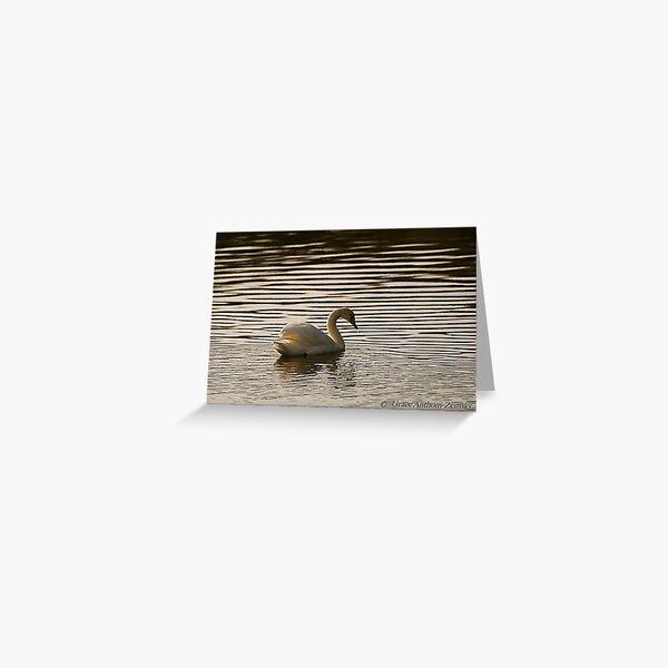 Solitary Swan Greeting Card