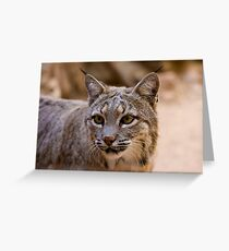 Portrait of a Bobcat Greeting Card