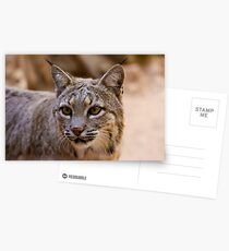Portrait of a Bobcat Postcards