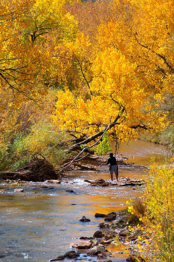 Fly-Fishing in the Jemez by Mitchell Tillison