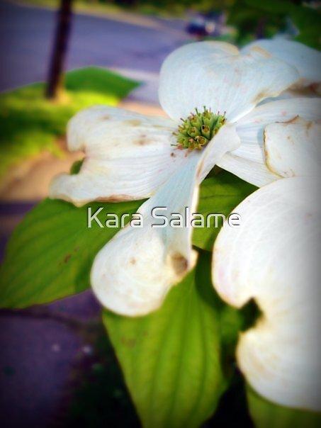 Pure Decadence by Kara Salame