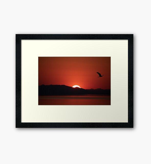 Sunset Hawk by jbailey325