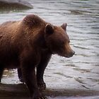 Another Grizzly (Ursus arctos horribilis) by Yukondick
